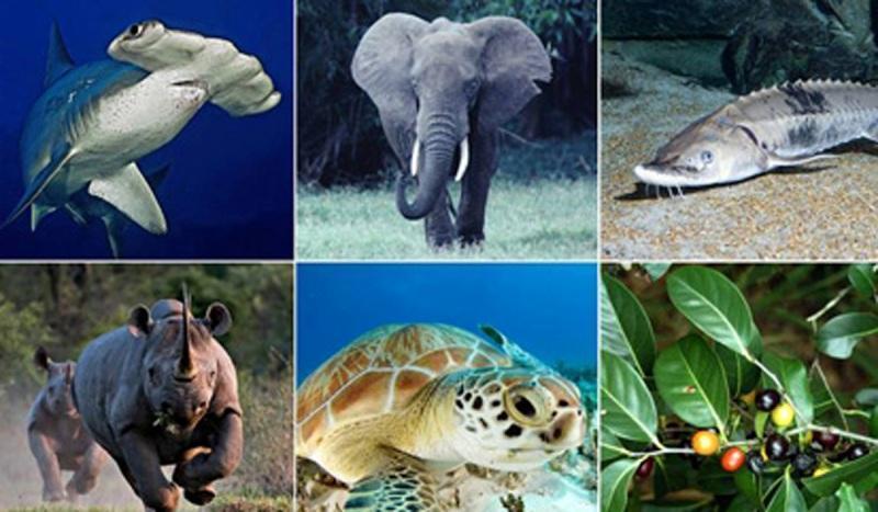 روش های نوین حفاظت از تنوع زیستی
