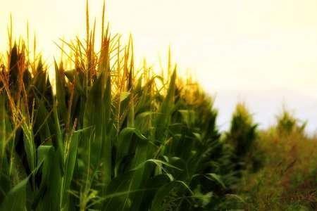 کشاورزی آمریکا هم اندازه اقتصاد اندونزی!