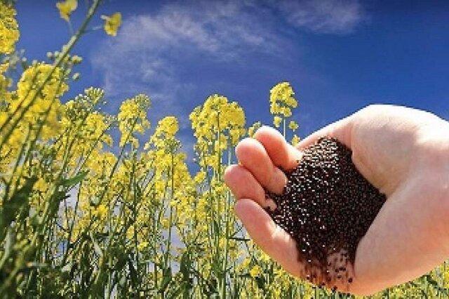 افزایش 2500 هکتاری سطح کاشت کلزا در فارس