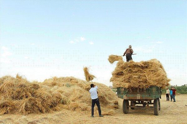 18 مرکز خرید تضمینی گندم در خراسان جنوبی تجهیز شد
