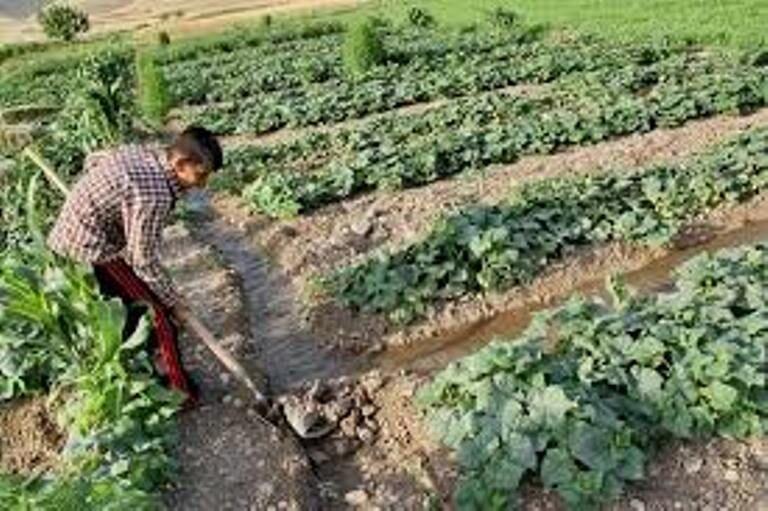 خبرنگاران 3848 شغل امسال باید در بخش کشاورزی قزوین ایجاد شود