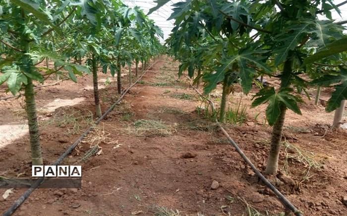 تسریع و تسهیل تجارت محصولات گیاهی بین ایران و برزیل