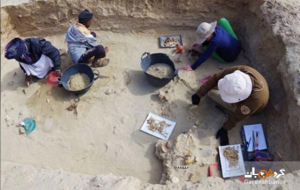 کشف قدیمی ترین گورستان حیوانات خانگی در مصر