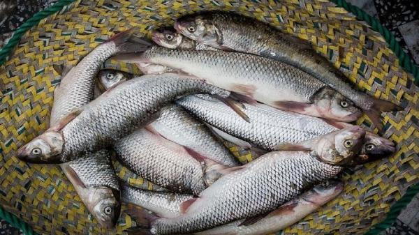 راهکارهای توسعه پرورش ماهی در کشور، ارز را به جای واردکننده به تولیدکننده نهایی بدهید