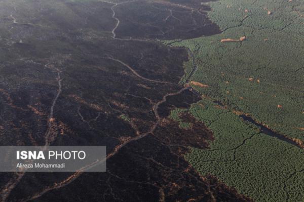 آتش سوزی در 3 هزار هکتار از هورالعظیم