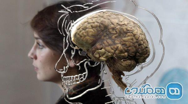 7 کاری که نمی دانستید مغز را تغییر می دهند